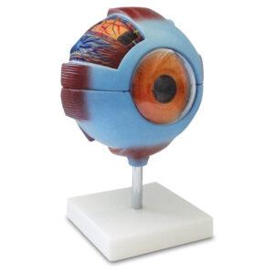 LM-301 Olho Humano