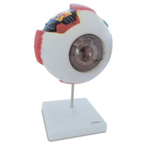 LM-301A Olho Humano