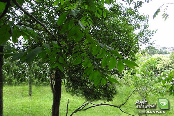 verde-martinato-reserva-ecologica