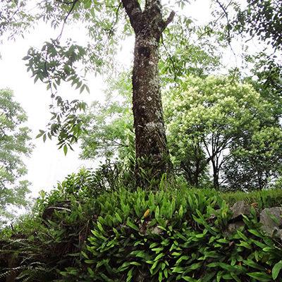 verde-martinato-reserva-ecologica2