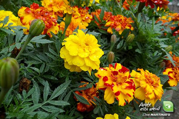 verde-martinato-reserva-sao-vedelino-flores-amarelas