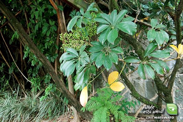 verde-martinato-reserva-sao-vedelino3