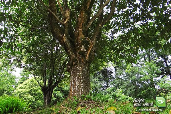 verde-martinato-reserva2