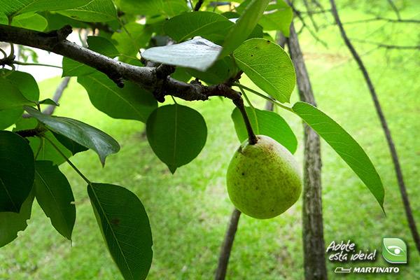 verde-martinato-reserva4