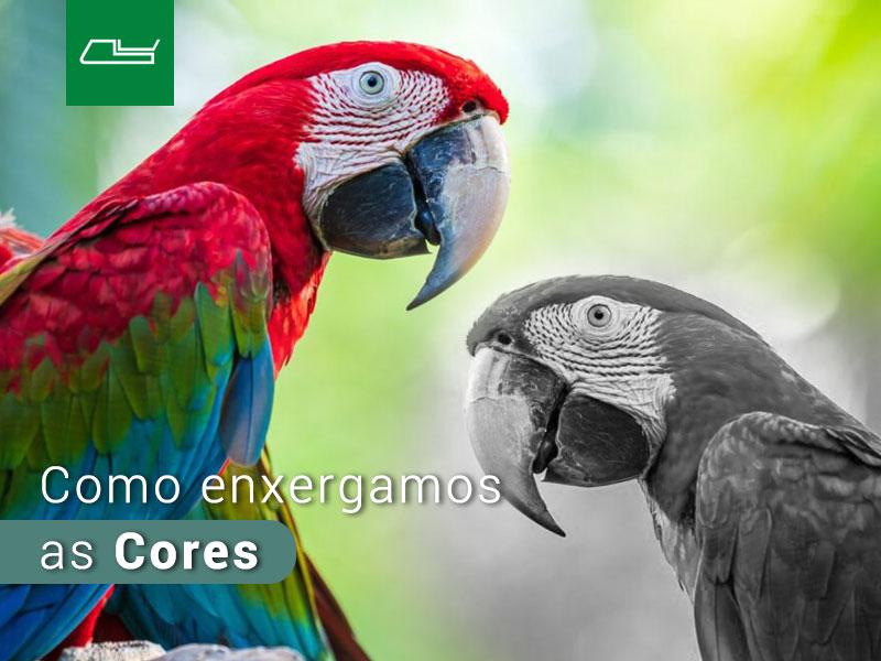Read more about the article Como enxergamos as cores e o Daltonismo